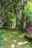 Rhododendren et jardins d'azalée photos stock
