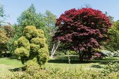 Rhododendren et jardins d'azalée image stock