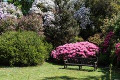 Rhododendren och azaleaträdgårdar Royaltyfri Foto