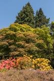 Rhododendren och azaleaträdgårdar Arkivbild