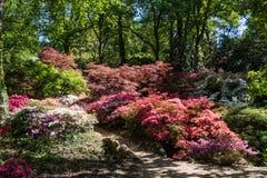 Rhododendren och azaleaträdgårdar Arkivfoto