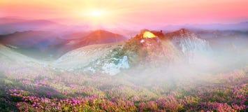 Rhododendren, schöne alpine Blumen Lizenzfreie Stockfotografie