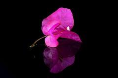 rhododendron Stockbild