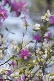 Rhododendron στοκ φωτογραφία με δικαίωμα ελεύθερης χρήσης