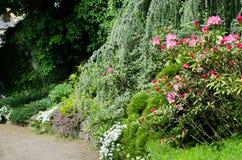 rhododendron Royaltyfria Bilder