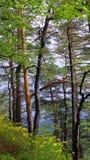 rhododendron Photographie stock libre de droits