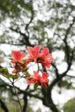 rhododendron Lizenzfreie Stockfotos