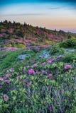 Rhododendron auf grasartigem Ridge Vertical Stockfoto