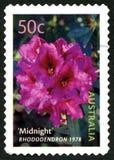Rhododendron-australische Briefmarke Lizenzfreie Stockbilder