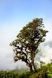 Rhododendron bei Kew Mae Pan Lizenzfreie Stockfotografie