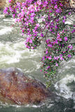 Rhododendron dauricum over river Ilgumen Royalty Free Stock Photography
