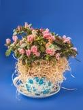 Rhododendron de floraison d'azalée avec des autocollants d'une paire de canard Image stock
