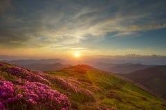 Rhododendron in den Bergen Stockfotografie