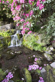 Rhododendron Flowers Blooming Over Waterfall Stock Photo