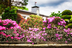 Rhododendron garden. Blooming rhododendron with pink flowers behind fence in spring garden. Springtime background. Focus on foreground Stock Image