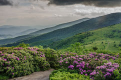 Rhododendron Garden with Foggy Roan Mountain Stock Photos