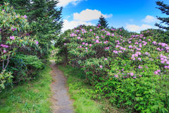 Rhododendron Garden Trail Roan Mountain NC Royalty Free Stock Images