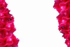 Rhododendron-Hintergrund Stockfotografie