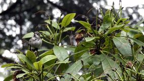 Rhododendron holds tiny hummingbird on rainy day
