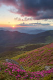 Rhododendron i berg Arkivbild