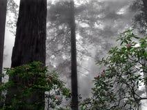 Rhododendron im Nebel Stockbilder