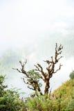 Rhododendron på Kew Mae Pan Arkivbild