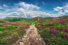Rhododendron rose magique photographie stock libre de droits