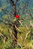 Rhododendron steg på berget royaltyfri foto