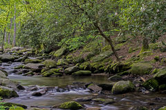 Rhododendron surround a small stream in the Smokies. Royalty Free Stock Images