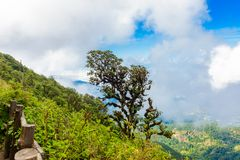 Rhododendron tree in Kew Mae Pan Nature Trail Trekking trail lea Stock Images