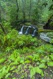 Rhododendron & vattenfall, Greenbrier, Great Smoky Mountains NP Royaltyfri Fotografi