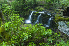 Rhododendron & Waterfalls, Greenbrier, Great Smoky Mountains NP Stock Photography