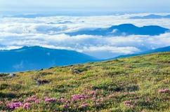 Rhododendronblumen, wenn bewölkter Berg beklagt wird Stockfotos
