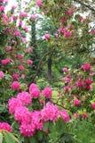 Rhododendrongarten Stockfotografie