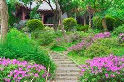 Rhododendrons στο ζωολογικό κήπο Wuhan στοκ φωτογραφίες με δικαίωμα ελεύθερης χρήσης