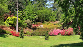 Rhododendrons and azaleas in an English Park Stock Photo