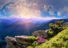 Rhododendrons of Carpathians Stock Photo