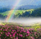 Rhododendrons en mai Photo libre de droits