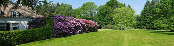 Rhododendrons in a park Stock Photography