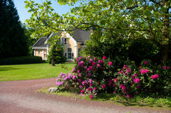 Rhododendrons in a park Stock Photo