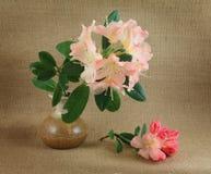Rhododendrons roses dans un vase Photos libres de droits