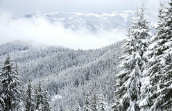 Rhodope Winterwald lizenzfreie stockfotos