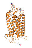 Rhodopsin protein Stock Photography