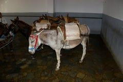 Rhodos Greece donkey stock photography