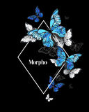 Rhombus butterfly morpho Royalty Free Stock Photos