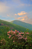 Rhonodendron和山 库存照片