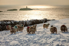 Rhoscolyn in winter Royalty Free Stock Photography