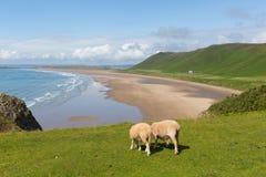 Rhossili Gower Peninsula South Wales en av de bästa stränderna i UK Royaltyfri Bild