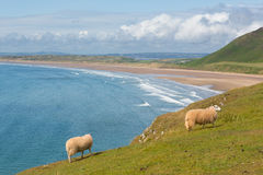 Rhossili strand Gower Wales UK Royaltyfri Fotografi