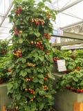 RHS切尔西花展2017年 世界` s显示在庭院设计的多数有名望的花展最好 库存图片